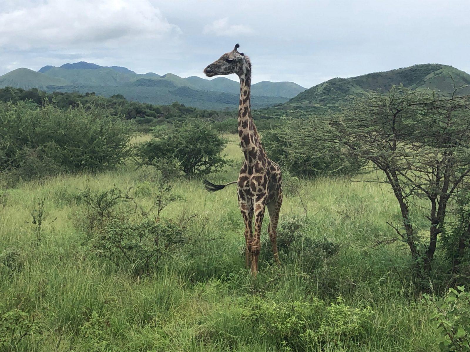 Za horyzont| Kenia i Tanzania na spontanie